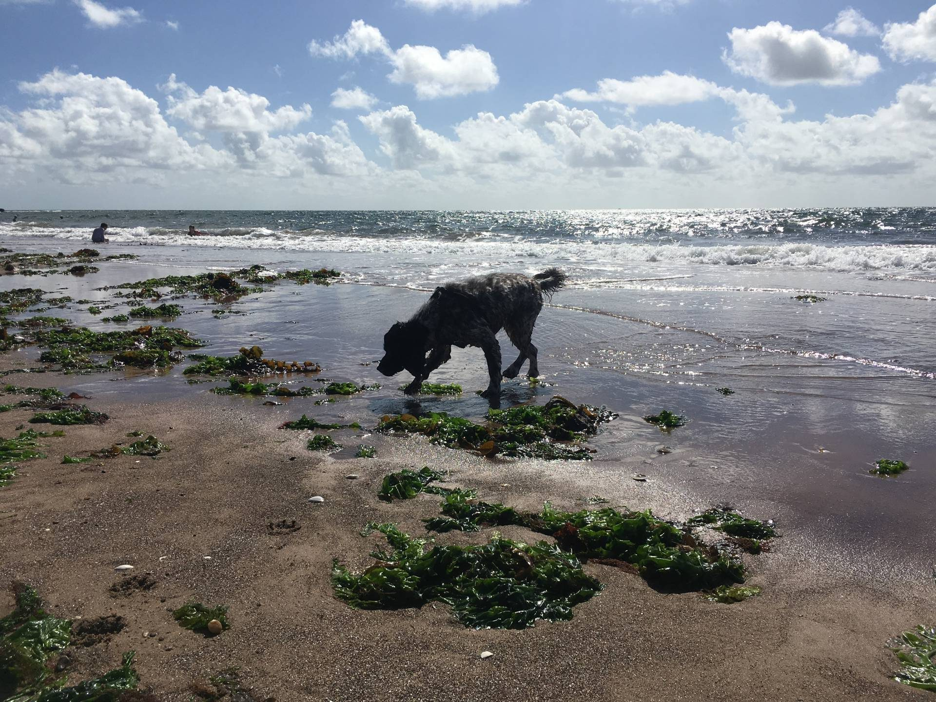 3 stunning dog friendly devon beaches